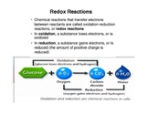 Cellular Respiration Lecture and Worksheets
