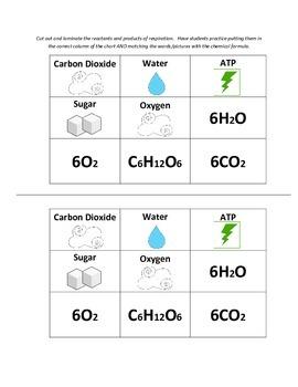 Cellular Respiration Manipulative Cards