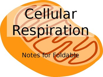 Cellular Respiration Notes for Foldable