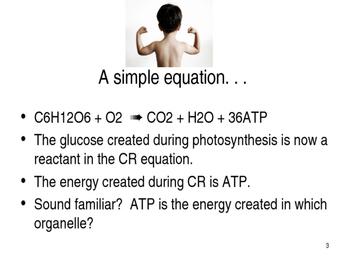 Cellular Respiration PPT