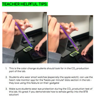 Cellular Respiration Lesson and Lab
