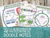 Cellular Respiration & Photosynthesis Doodle Notes Bundle