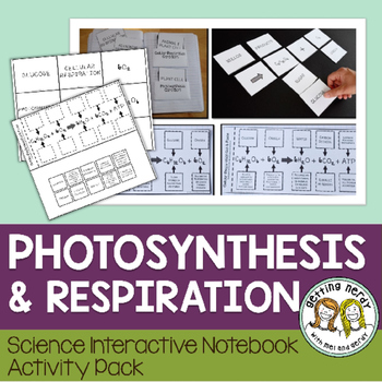 Respiration & Photosynthesis - Science Interactive Notebook