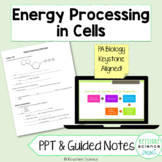 Cellular Respiration Photosynthesis PowerPoint and Guided