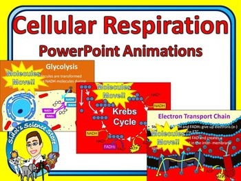 Cellular Respiration PowerPoint Animations
