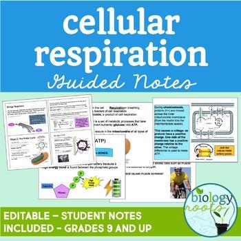 Cellular Respiration PowerPoint Presentation