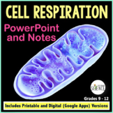 Cellular Respiration PowerPoint