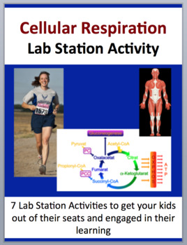 Cellular Respiration - 7 Lab Station Activities