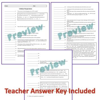 Cellular Respiration Quiz, Homework or Review