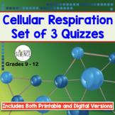 Cellular Respiration Quiz Set of 3