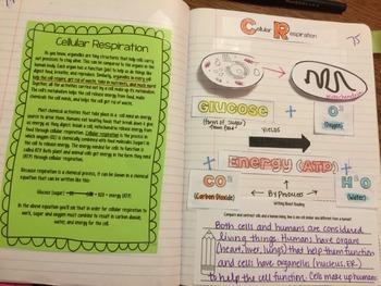 Cellular Respiration Reading Comprehension Interactive Notebook
