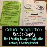 Cellular Respiration Read and Apply Interactive Notebook {NGSS MS-LS1-7}
