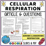 Cellular Respiration Reading Comprehension & Questions - D