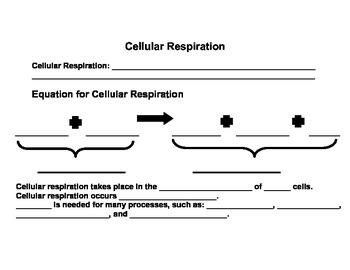 Cellular Respiration Review Sheet