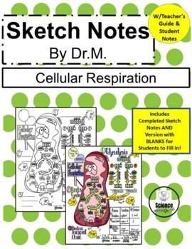 Cellular Respiration Sketch Notes Doodle Notes