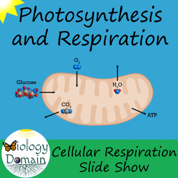 Cellular Respiration Slide Show