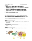 Cellular Respiration Stages Posters/Overheads