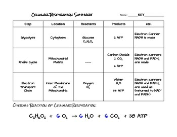 Cellular Respiration Summary Chart