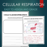 Cellular Respiration Summary and Picture Project