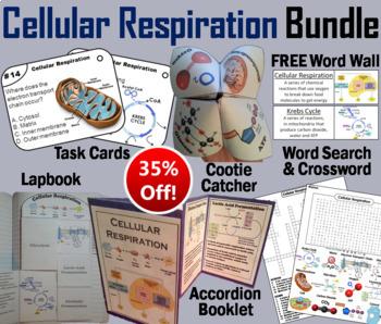 Cellular Respiration Task Cards and Activities Bundle