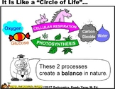 Cellular Respiration VS. Photosynthesis (Compare & Contrast)