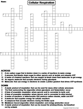 Cellular Respiration Worksheet/ Crossword Puzzle by Science Spot
