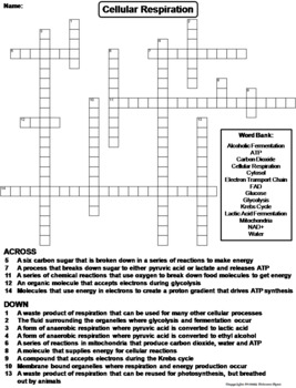 Cellular Respiration Worksheet/ Crossword Puzzle