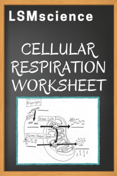 cellular respiration worksheet by lsmscience teachers pay teachers. Black Bedroom Furniture Sets. Home Design Ideas