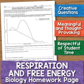 Cellular Respiration and Free Energy Biology Homework Worksheet