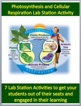 Cellular Respiration and Photosynthesis - 7 Engaging Lab Station Activities