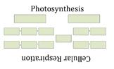 Cellular Respiration and Photosynthesis Equation Organizer