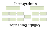 Cellular Respiration and Photosynthesis Equation Organizer