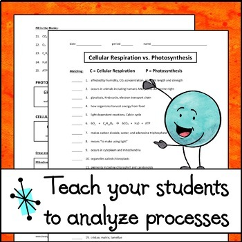 Cellular Respiration vs. Photosynthesis - Worksheet by The ...
