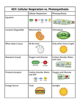 cellular respiration vs photosynthesis cut and paste chart by hannah juang. Black Bedroom Furniture Sets. Home Design Ideas
