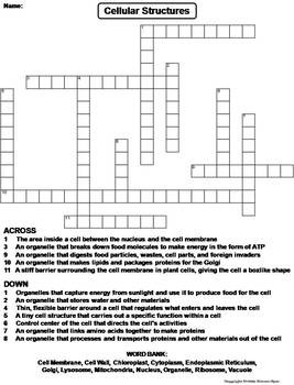 Plant and Animal Cell Organelles and Function Worksheet/ Crossword Puzzle