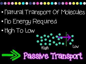 Cellular Transport (Active Versus Passive) Foldable