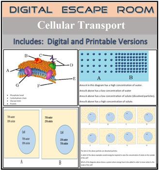 Cellular Transport Digital Escape Breakout Activity