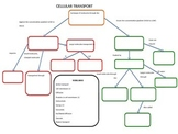 Cellular Transport Graphic Organizer *Editable with Key*