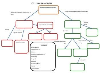 Cellular Transport Graphic Organizer *Editable with Key*