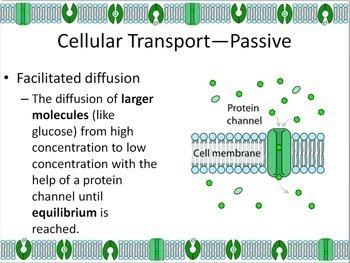 Cellular Transport Powerpoint Slide Show