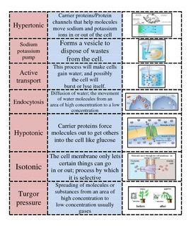 Cellular Transport Vocabulary #2