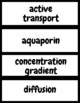 Cellular Transport Vocabulary Bundle