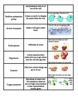 Cellular Transport Vocabulary Cut-N-Paste