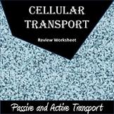 Cellular Transport Worksheet