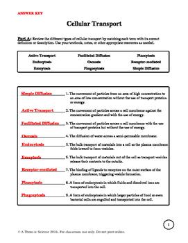 Cellular Transport Worksheet version 2