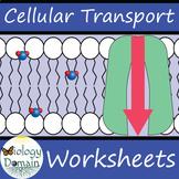 Cellular Transport Worksheets