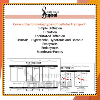 Cellular Transport - Osmosis, Filtration, Facilitated and Active Transports