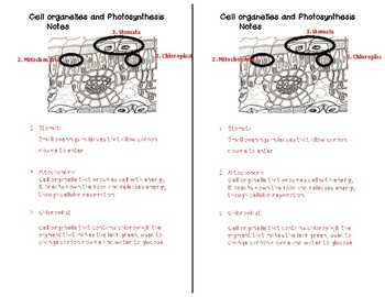 Cellular organelles and Photosynthesis