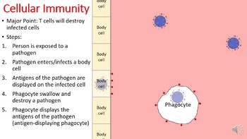 Cellular vs. Humoral Immunity PowerPoint (with free student handout)