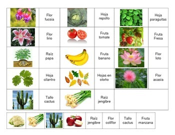 Center of Plant Parts and Class Activity in Spanish